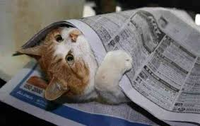 猫のココがかわいいっていうところ教えてもらったよ|行政書士阿部総合事務所