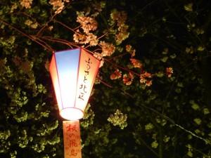 飛鳥山公園の桜20150328 LUMIX GX1|行政書士阿部総合事務所