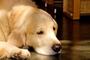 ペットに財産を残すには?飼い主が亡くなった後のペットの行方|行政書士阿部総合事務所