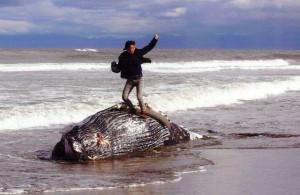 「死んだクジラに乗ってガッツポーズの写真が最優秀賞を受賞して炎上している問題」|行政書士阿部総合事務所