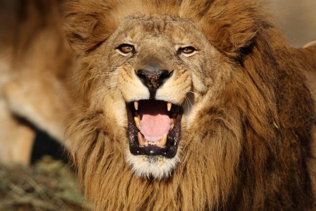 新キャッチフレーズ【「創業支援」と「資金調達」に強い野獣系行政書士】|行政書士阿部総合事務所
