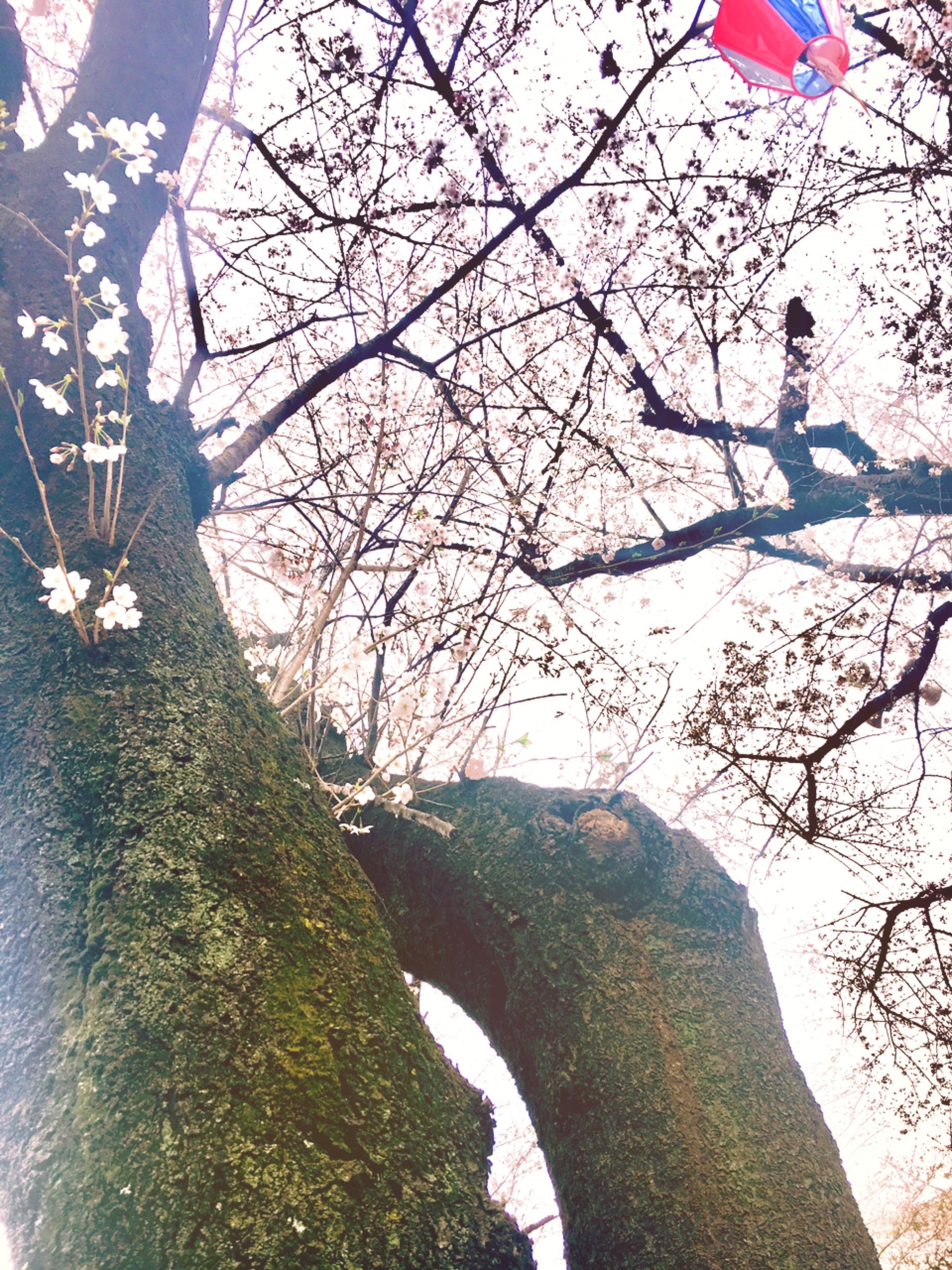 飛鳥山公園の桜と94歳と生きるについて|行政書士阿部総合事務所
